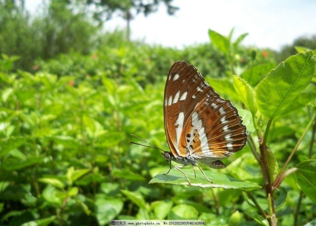 蝴蝶 动物 昆虫 生物世界 摄影