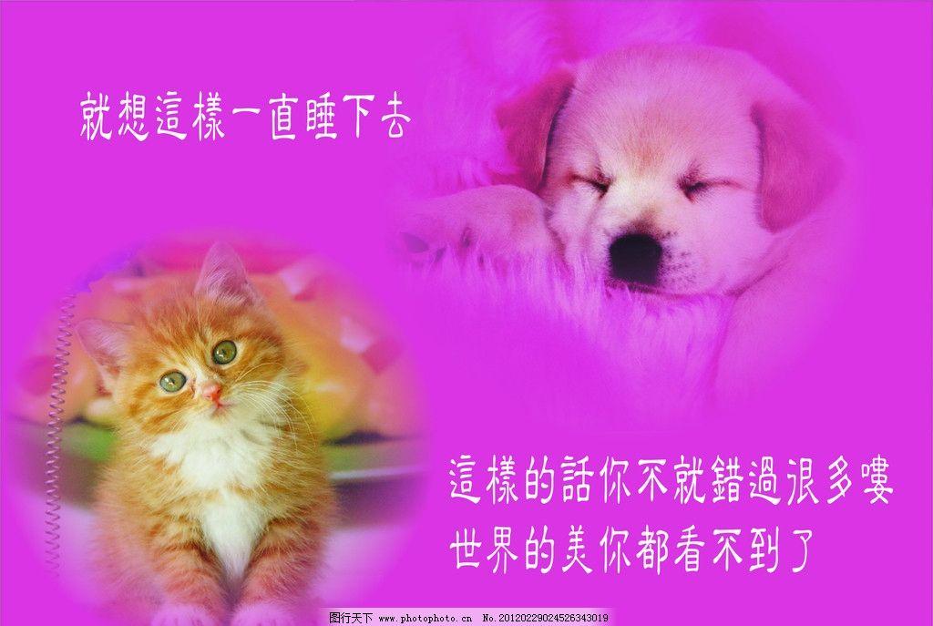 宠物画 猫咪 狗狗 宠物素材