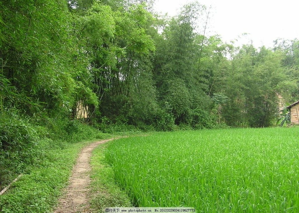 竹林小路 风景图片 草地 绿树 小路 自然风景 旅游摄影 摄影 72dpi