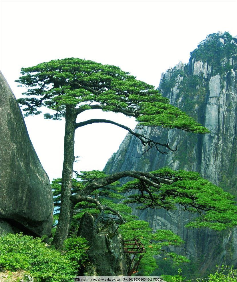 迎客松 真实照片 自然风景 自然景观 摄影 72dpi jpg