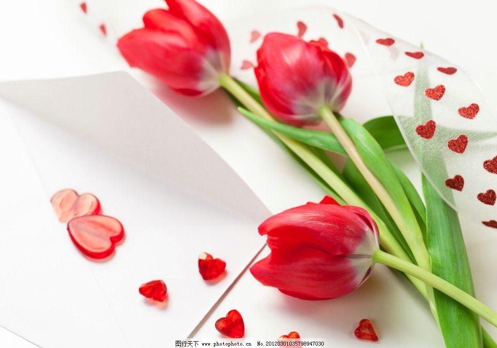 郁金香 花 花朵 红色 花卉 情人节 妇女节 心型 桃心 爱心 背景 花草