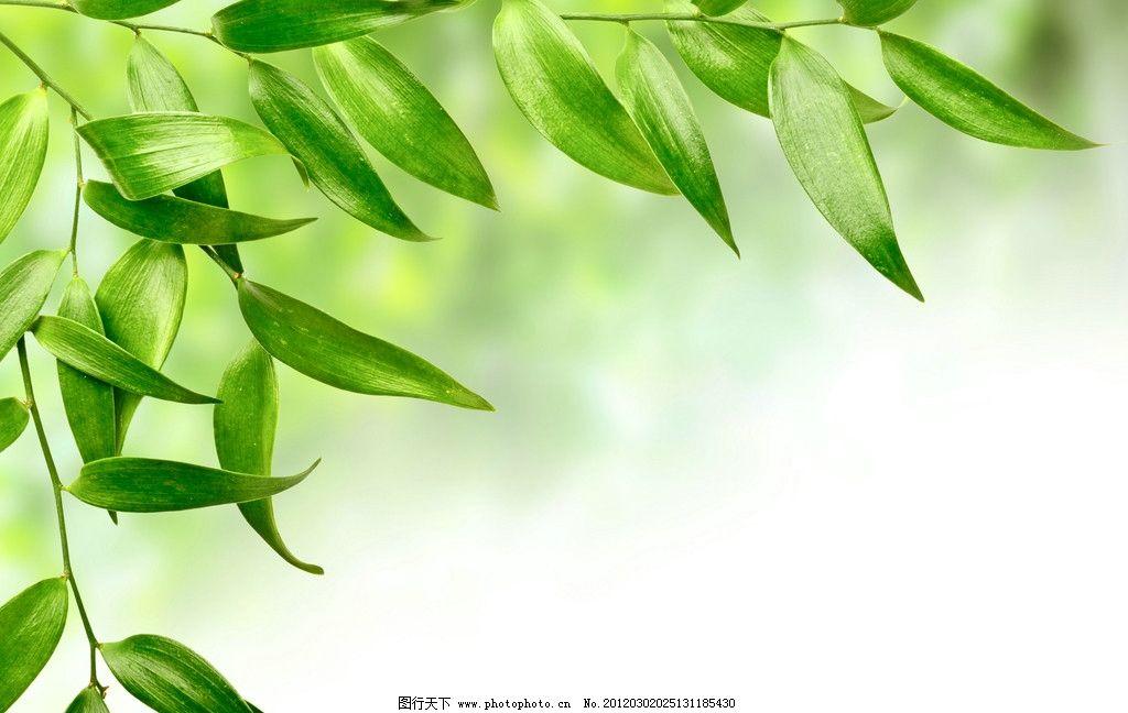 竹叶 绿叶 叶子 树叶 竹子 设计 300dpi jpg 花草 生物世界