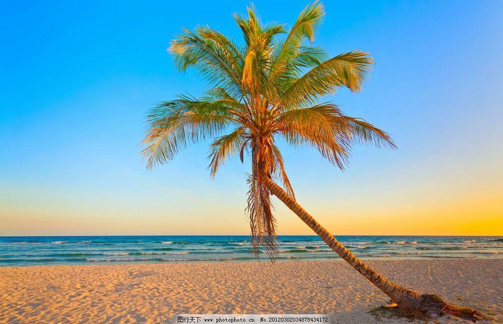 热带海滩 海边风景 海边 蓝天 白云 大海 海滩 树木 沙滩 海水 碧海