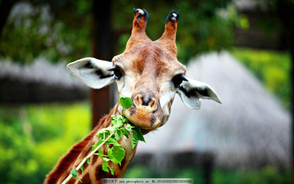 动物世界 野生动物