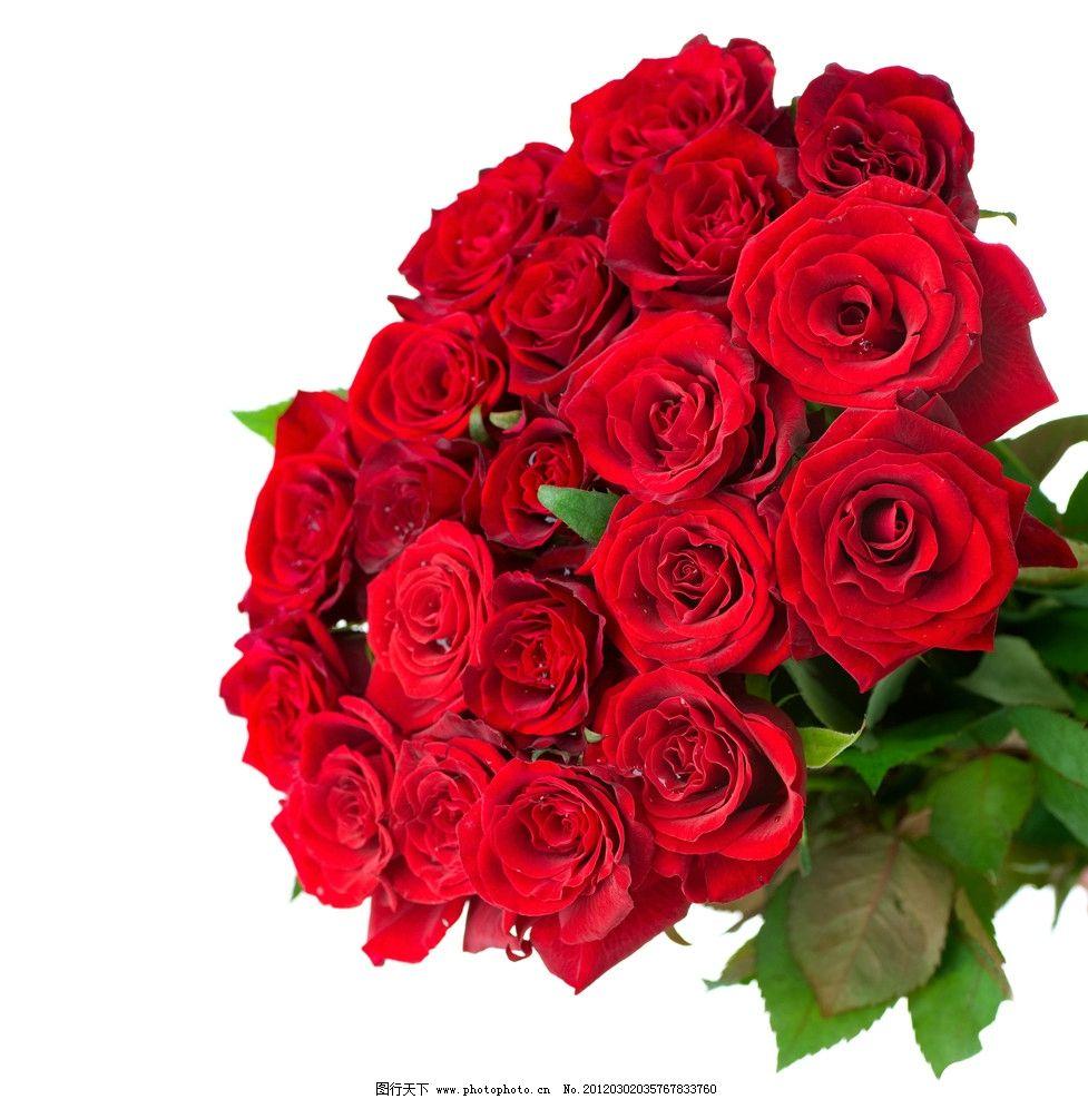 玫瑰花图片,玫瑰花束 玫瑰花高清图片 礼品 礼物 花朵