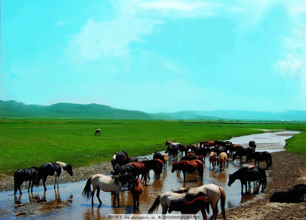 群马图 骏马 草原 蓝天 草地 内蒙古大草原 自然风景 旅游摄影 摄影