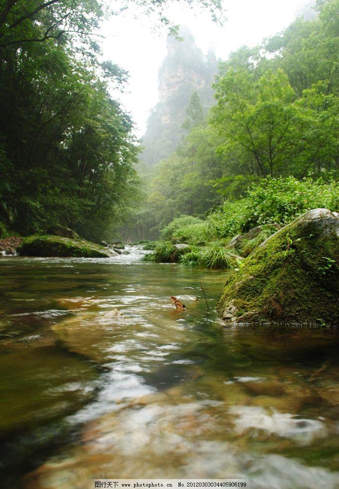 山水风景 山水 流水 森林 风景 树木 自然风光 自然景观 摄影 300dpi