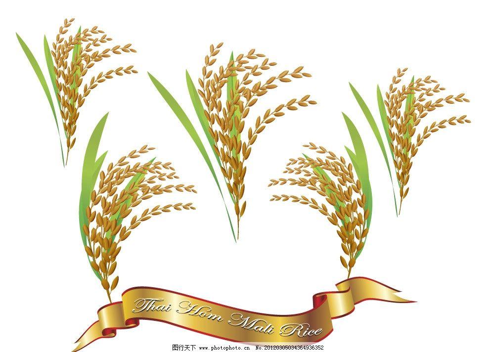 泰国大米 大米 金色 麦穗 丝带 矢量 其他生物 生物世界 eps