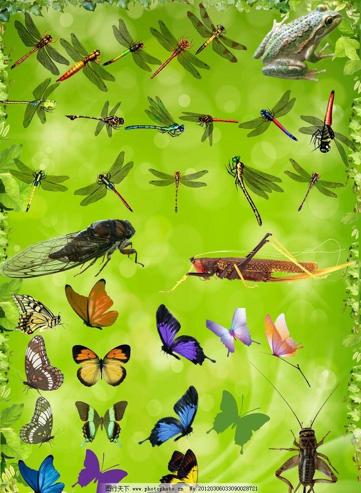 春季昆虫动物图片