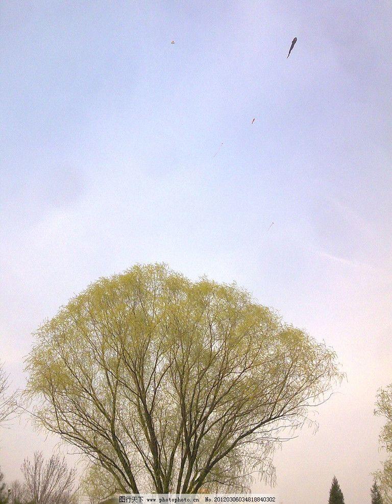 天空景观 树 天空 风筝 树叶 树木 风景 自然风景 自然景观 摄影 300