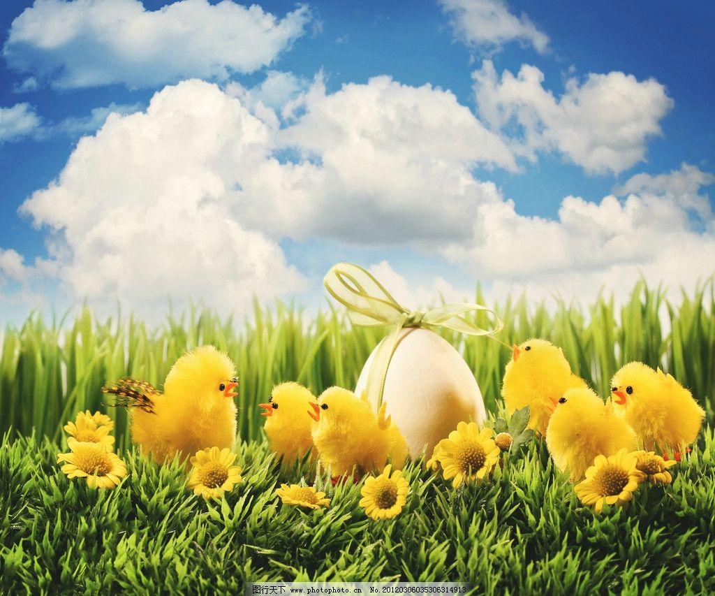 可爱小鸟 小鸟 小鸡 鸟蛋 礼物 草地 小草 野菊花 鸟类 生物世界 摄影