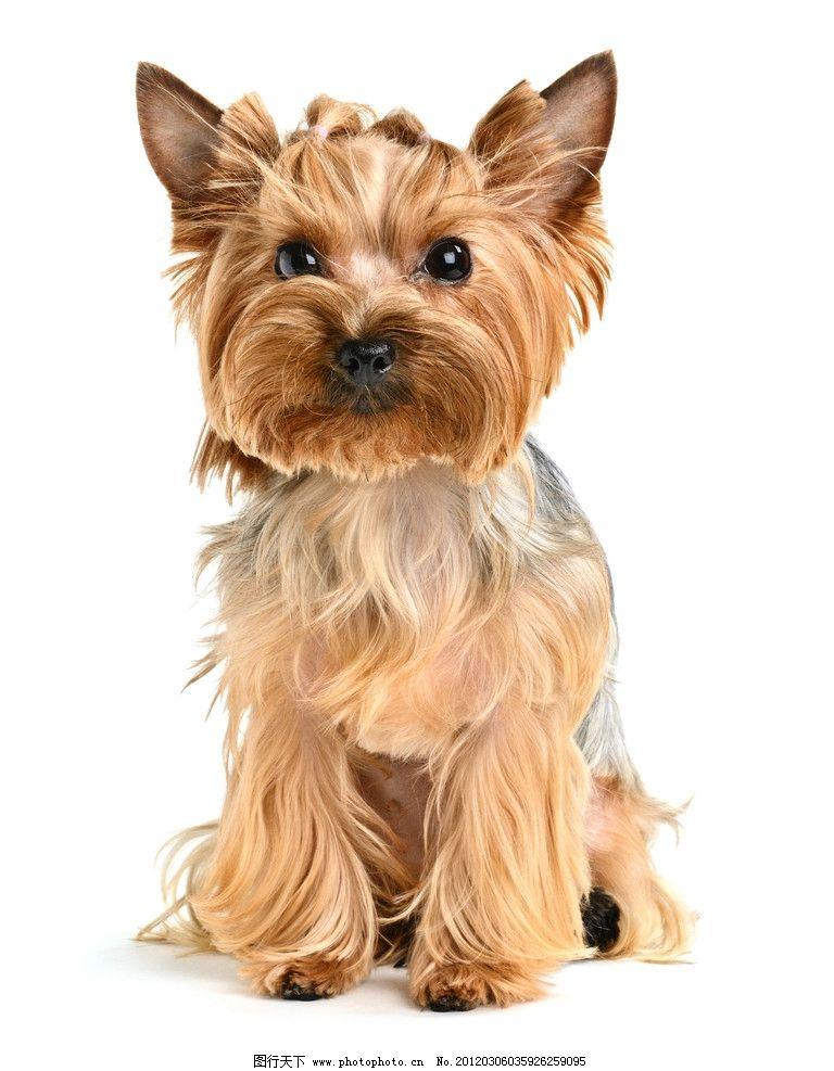 可爱小狗 可爱 小狗 宠物 动物 宠物主题 家禽家畜 生物世界 摄影 300