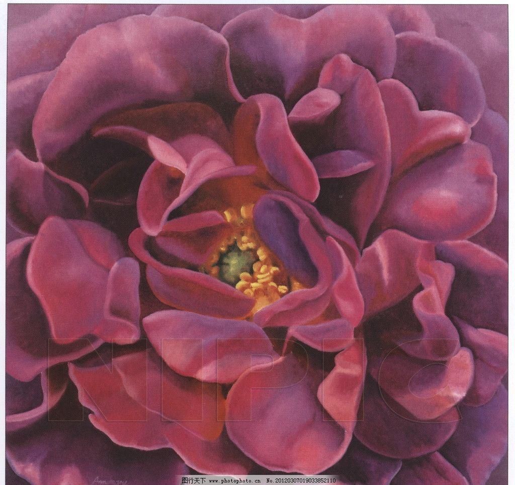 牡丹花 紫色/紫色牡丹花图片