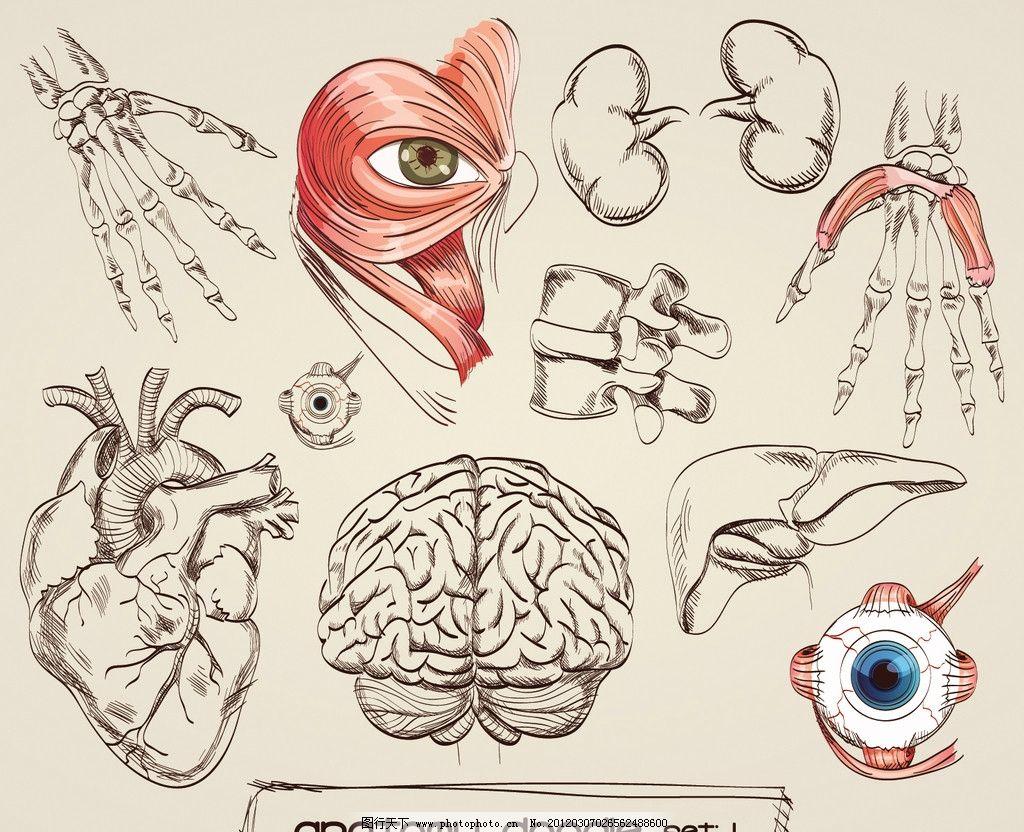 器官 人体 身体 心脏 肺脏 肝脏 大脑 眼睛 眼球 结构图 医学 示意图