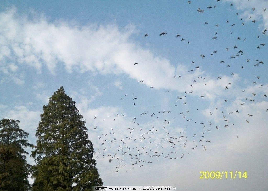 飞鸟 天空 小树 绿树 蓝天 白云 风景 摄影