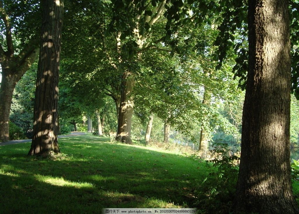 林中道路 风景 树林 道路 素材 图库 自然风景 自然景观 摄影 72dpi