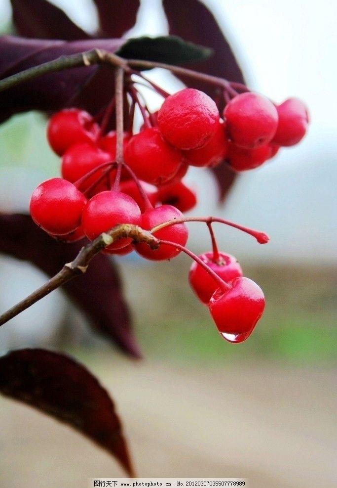 春华秋实 花 鲜花 微距 花朵 素材 花卉 果实 水果 生物世界 摄影 72