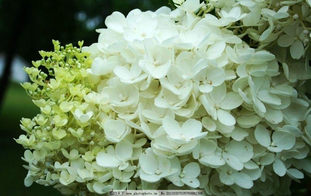 簇锦团花图片