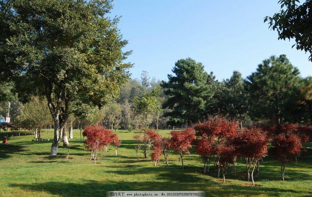 园林 公园 绿化 绿树 蓝天 草地 树木树叶 生物世界 摄影 300dpi jpg