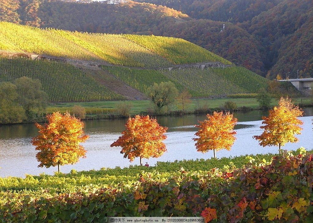 秋色中的德国风景 秋天的葡萄园 小树 水面 山峦 自然风景 旅游摄影
