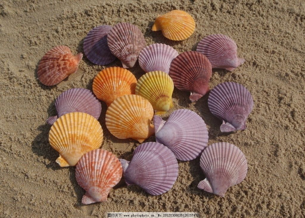 螺蛳贝壳手工制作幼儿园