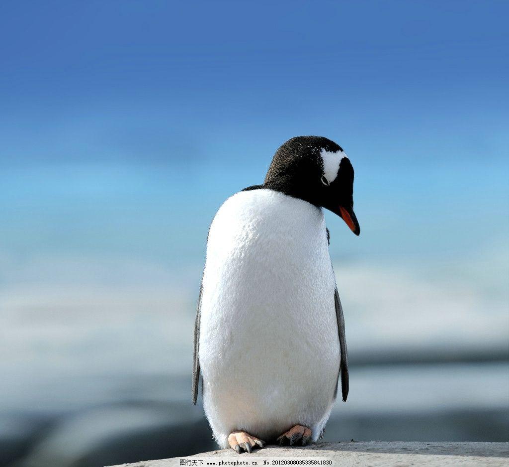 壁纸 动物 企鹅 1024_938