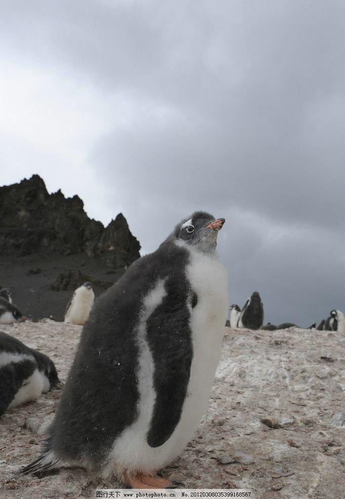 南极动物图片png格式