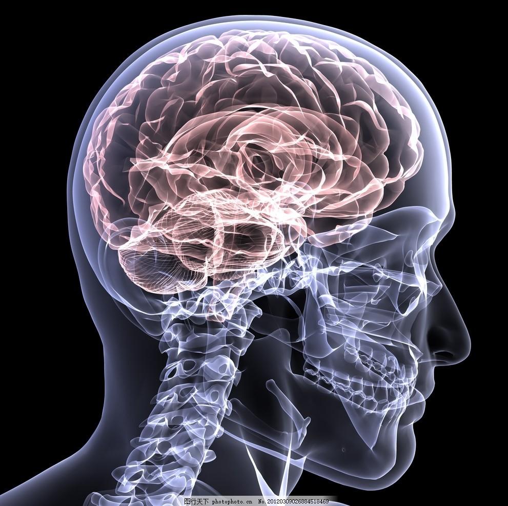 头部透视图 透明 人体 治疗 医学 大脑 小脑 神经 思维 颈椎
