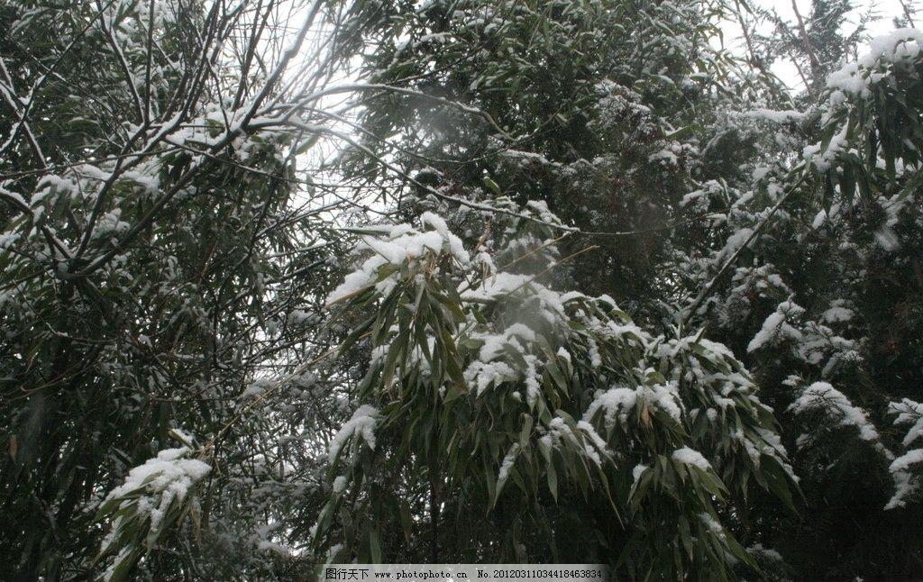 雪压绿树 大雪 绿树 树枝 雪花 山水风景 自然景观 摄影 72dpi jpg