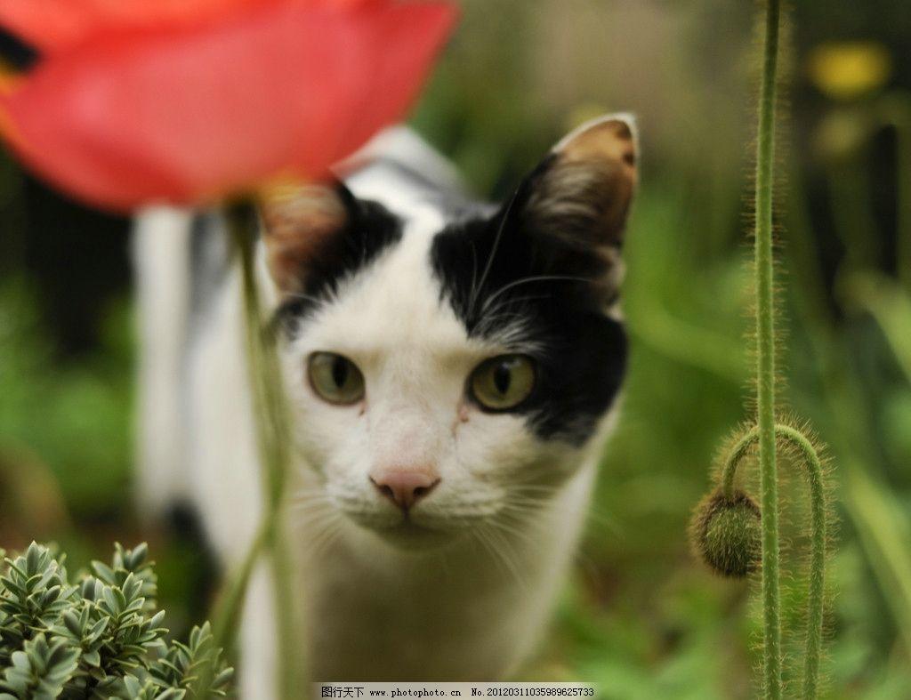 花丛中 好奇 小猫咪 可爱 有趣 黑白双色 家禽家畜 生物世界 摄影 300