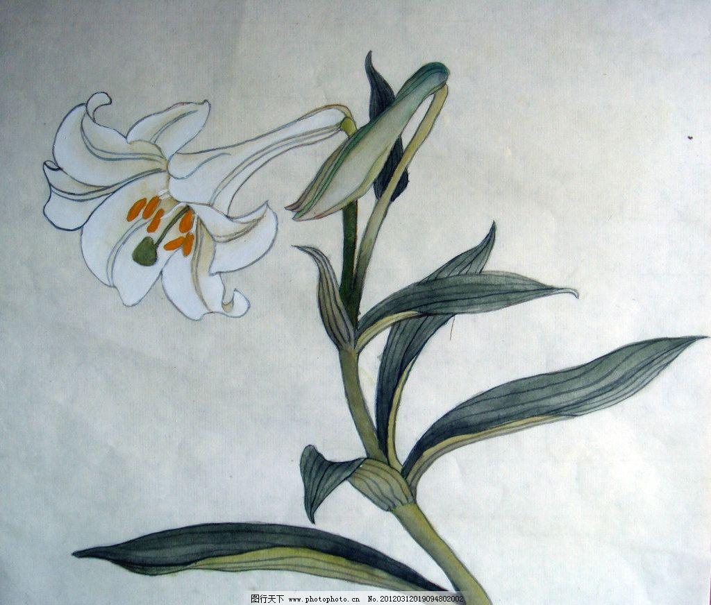百合花 国画 花卉 花 绘画 绘画艺术 绘画书法 文化艺术 设计 72dpi