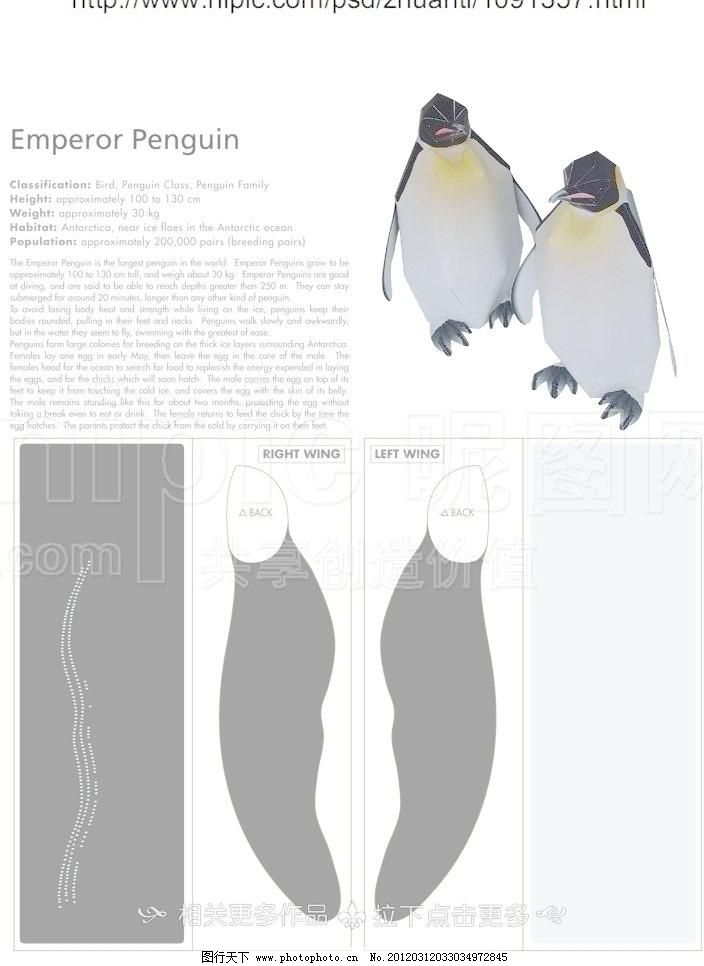 企鹅模型 纸模 纸模玩具 模型玩具 玩具模型 手工 手工制作 拼贴手工