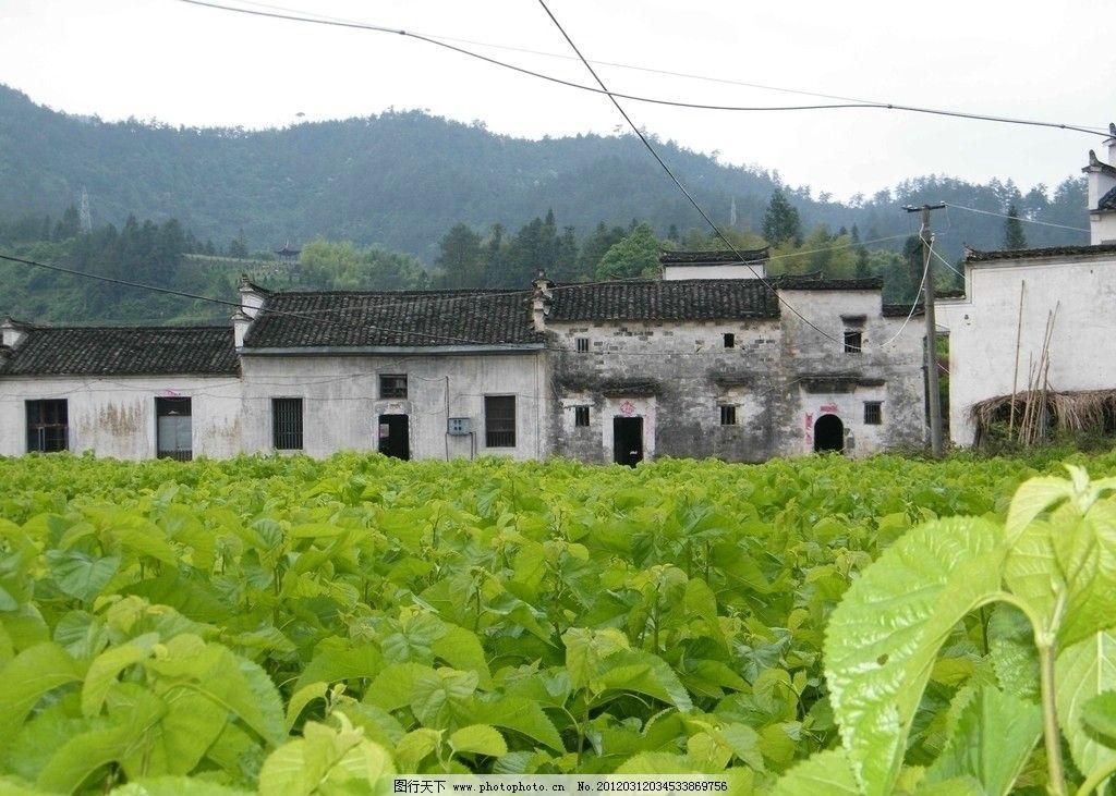 设计图库 自然景观 田园风光    上传: 2012-3-12 大小: 596.