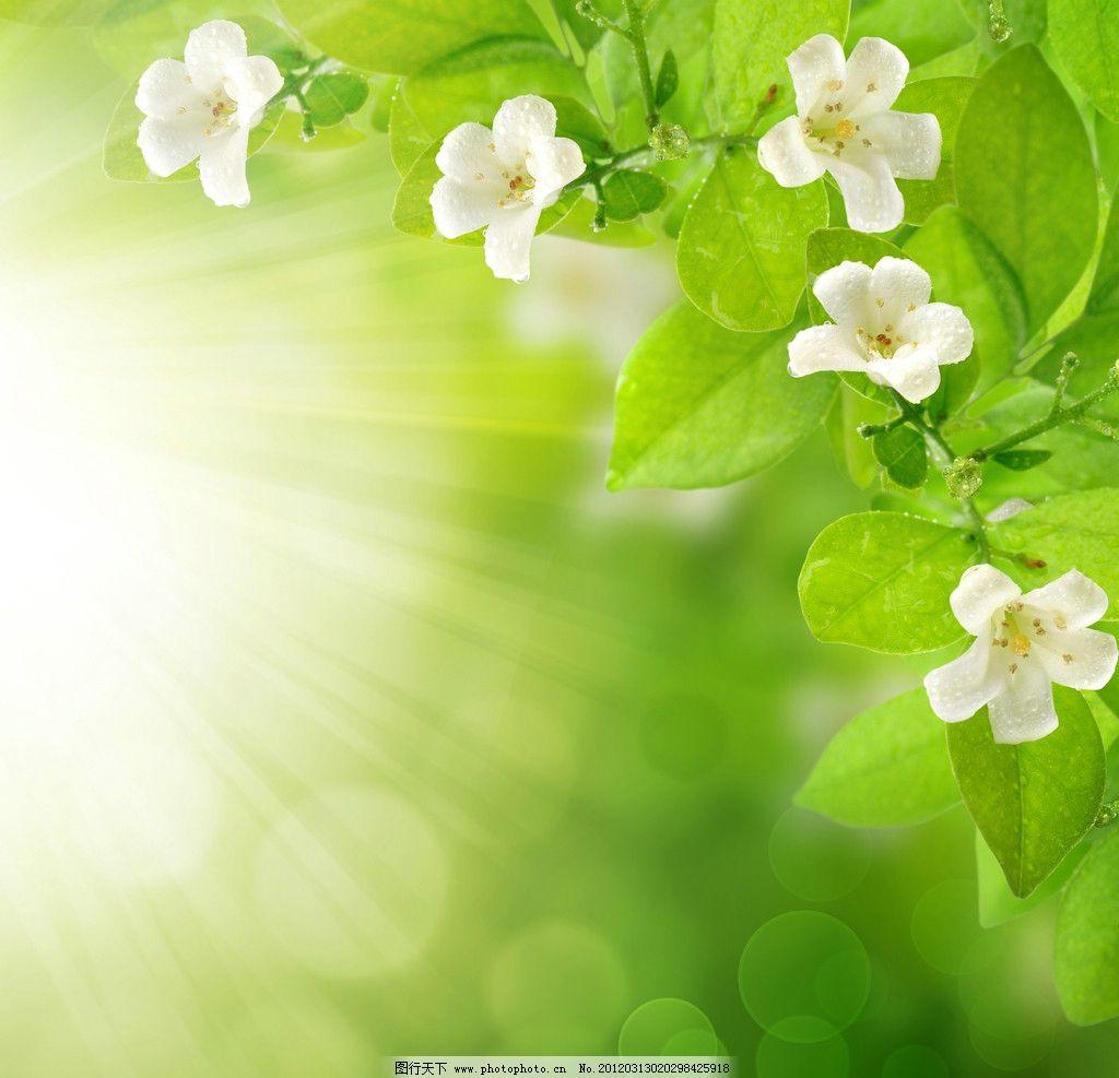 梦幻绿色背景 绿叶 绿色 清新 树叶 青草 草丛 小草 蝴蝶 绿意 花草