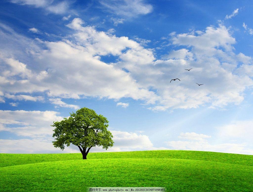 蓝天白云绿野孤树 草坪 草地 大树 大自然 草原 绿化 绿色 风景摄影