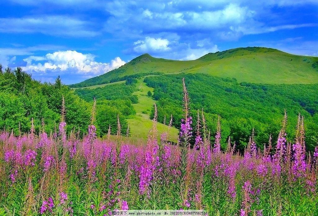山林 绿树 绿色 环保 花海 绿山 草地 青草 太阳 花朵 原野 鲜花 自然