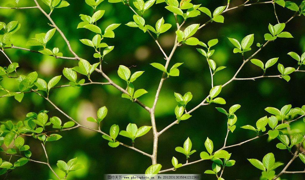 春天树枝绿叶 绿叶 树叶 树木 树枝 发芽 绿色 树 植物 土堆 幼芽