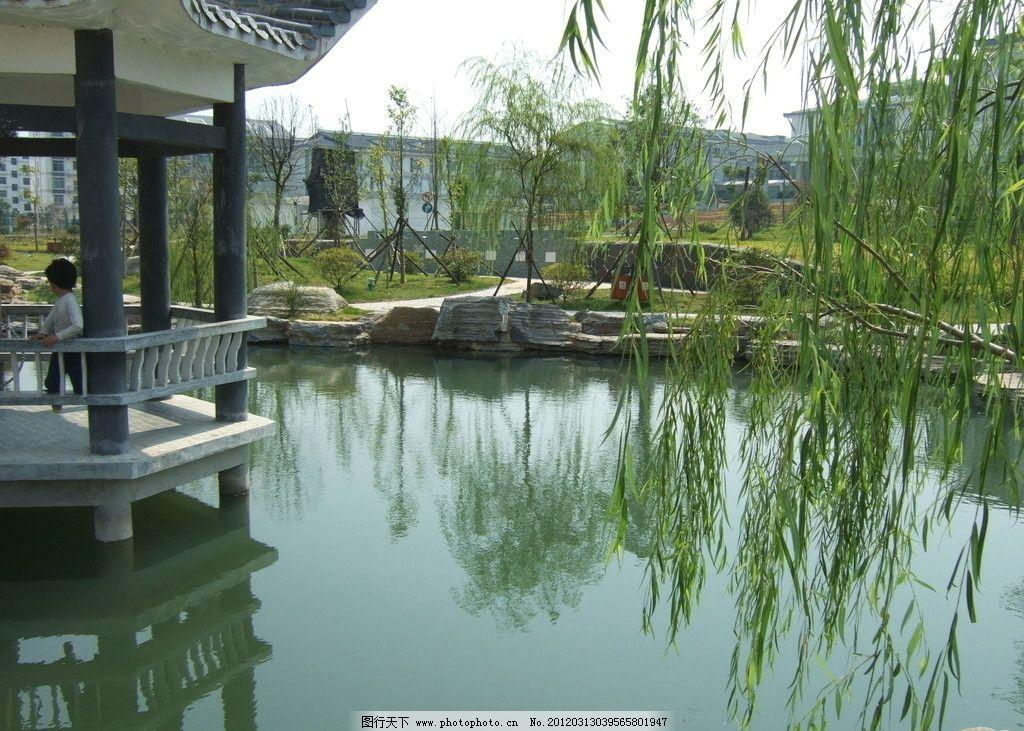 风景背景 亭子 柳树 湖 水 园林建筑 建筑园林 摄影 72dpi jpg