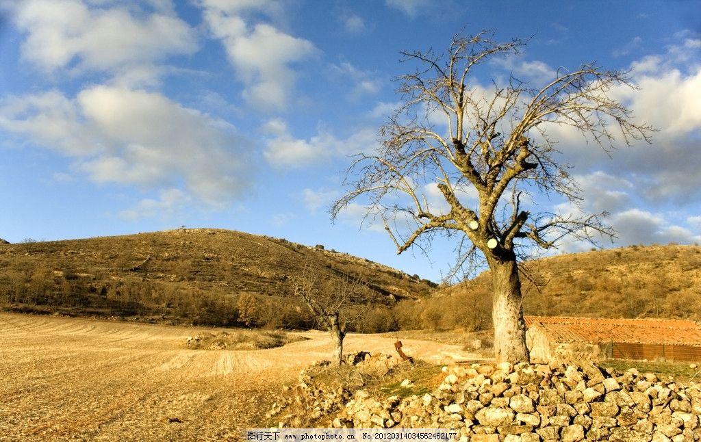 荒漠风光 荒漠 荒原 风光 风景 景色 景观 大树 树木 高山 田园风光