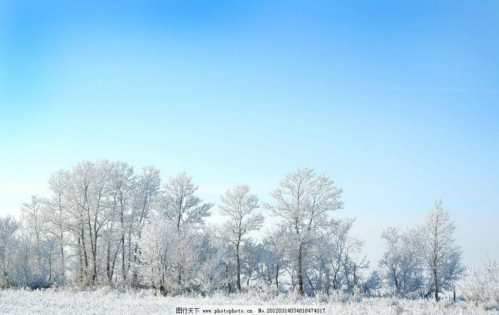 冬季大雪风光 冬季 冬天 冬日 大雪 冰雪 风光 风景 景色 景观 大树