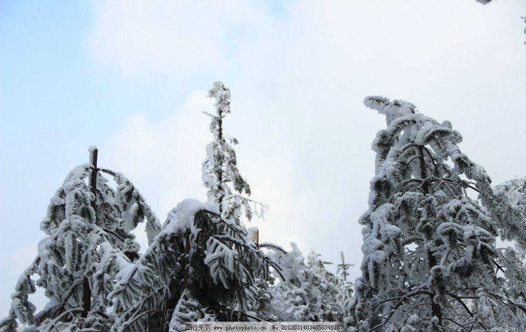 峨眉山 雪景 峨眉山雪 雪树 自然风景 山水风光 银妆素裹 积雪