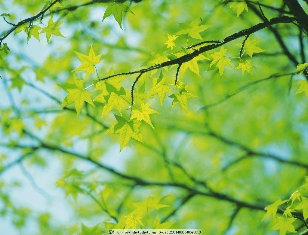 树木 树枝 绿树 树林 萌发 阳光 光线 嫩绿 春天 绿色植物 树木树叶