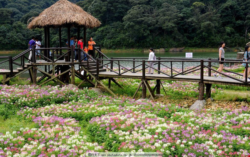 公園 園林 花園 花海 鮮花 湖水 樹林 山林 木橋 草屋 自然風景 旅游