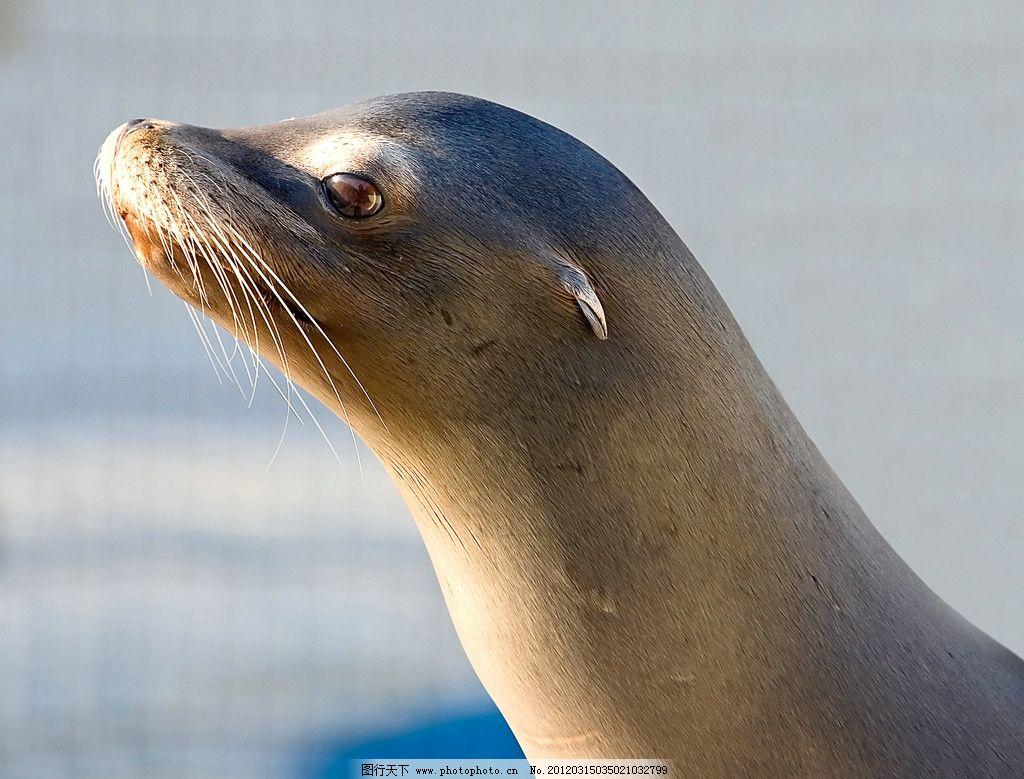 海豹 海洋生物 野生动物 可爱 珍贵 珍惜 保护 生物世界 摄影