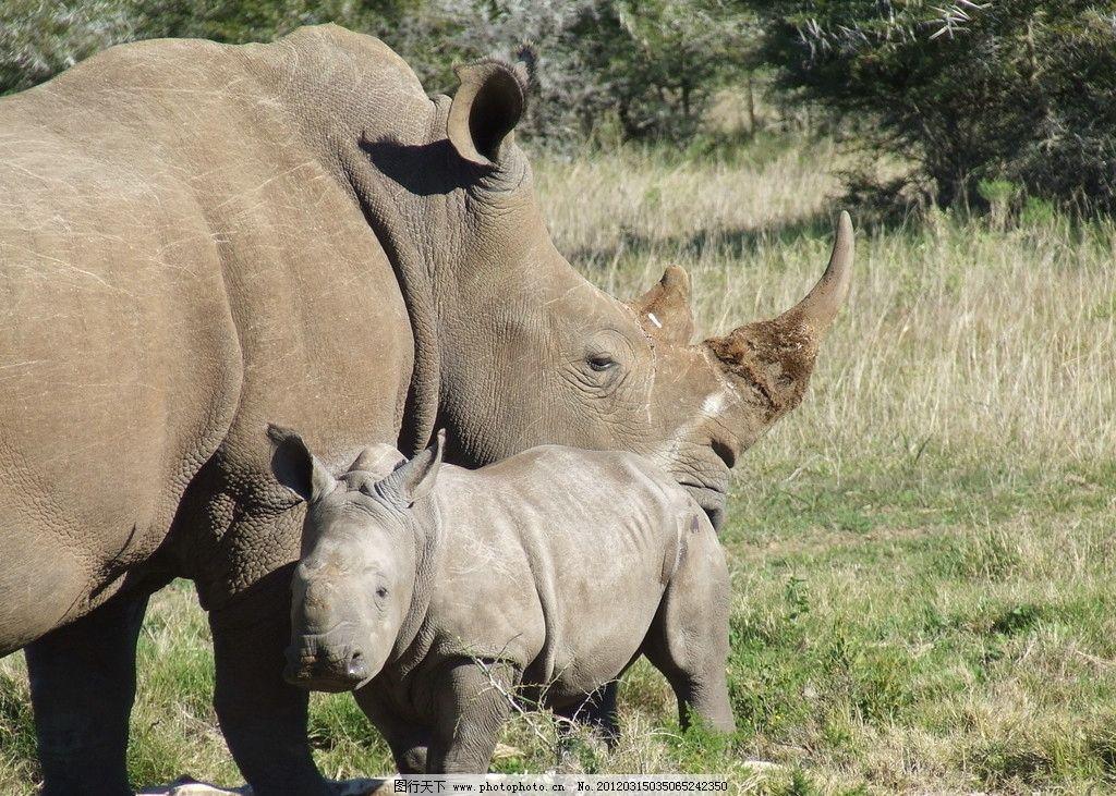 野生 保护 动物 犀牛角