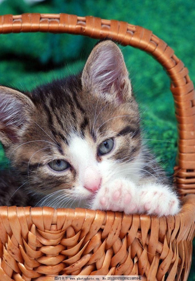 壁纸 动物 猫 猫咪 小猫 桌面 685_987 竖版 竖屏 手机