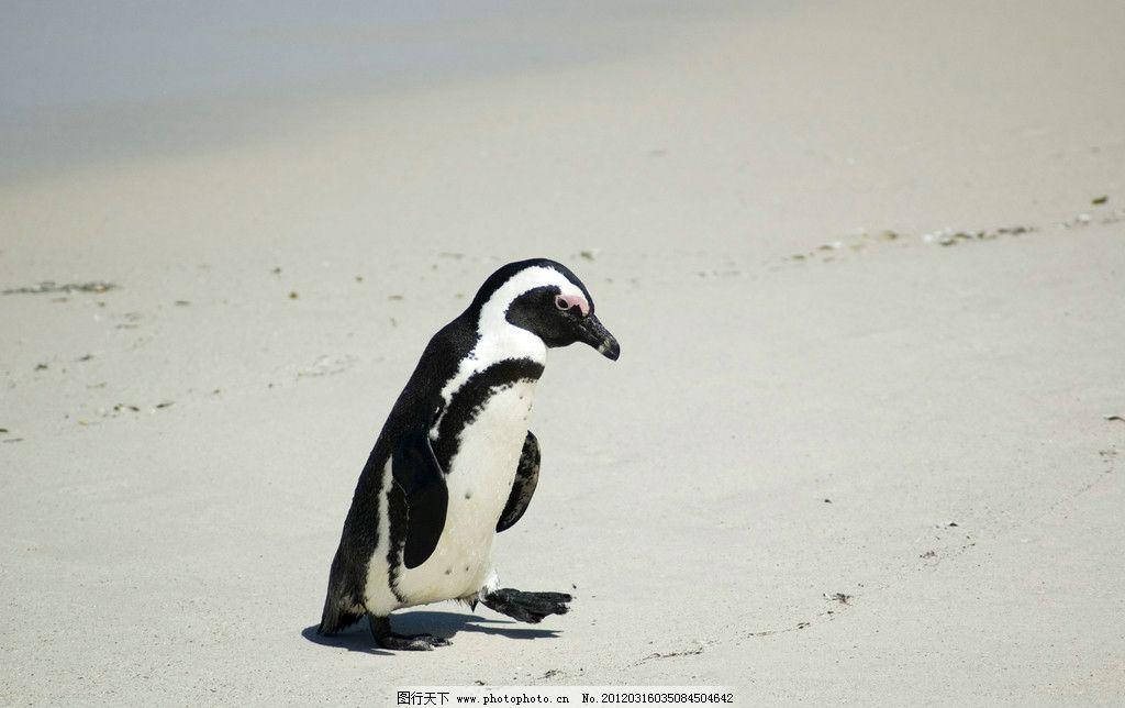 南极动物图片及名称