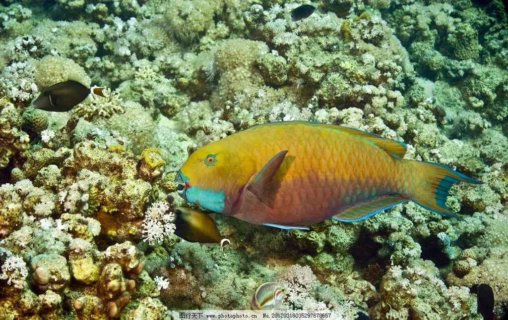 深海小鱼 海洋 大海 海底世界 鱼类 观赏鱼 生物世界 摄影