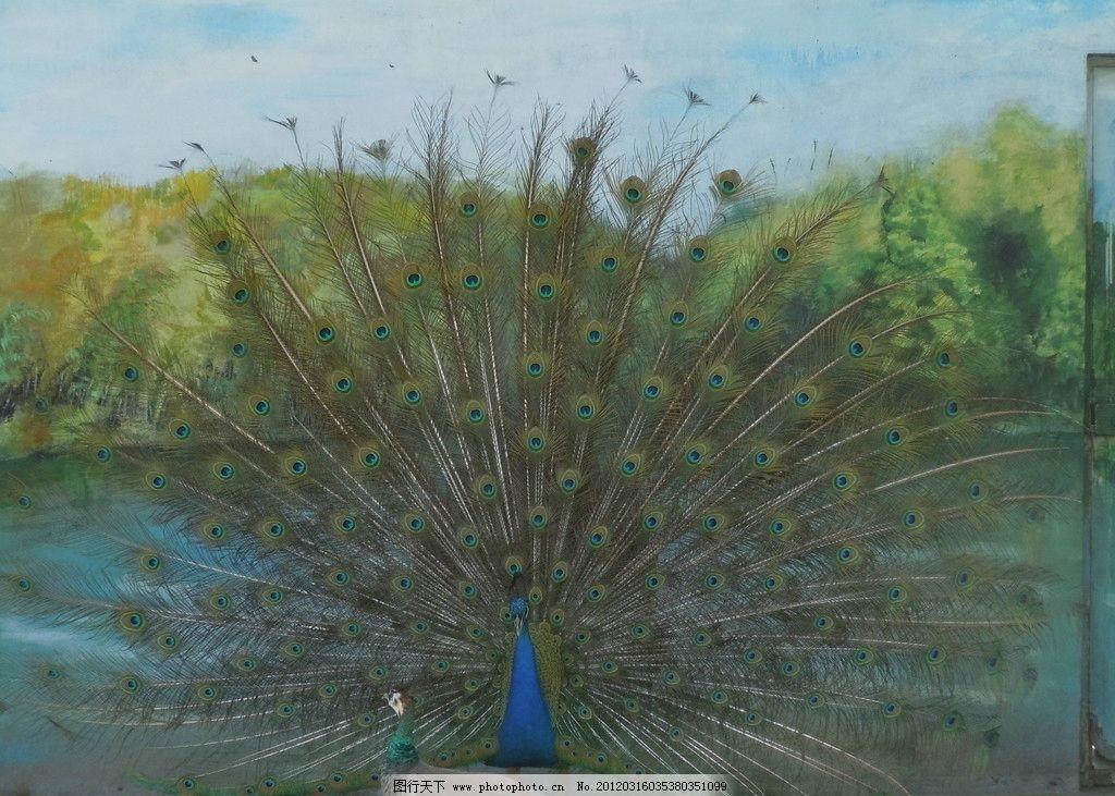 孔雀开屏 动物园 鸟类 生物世界 摄影 300dpi jpg