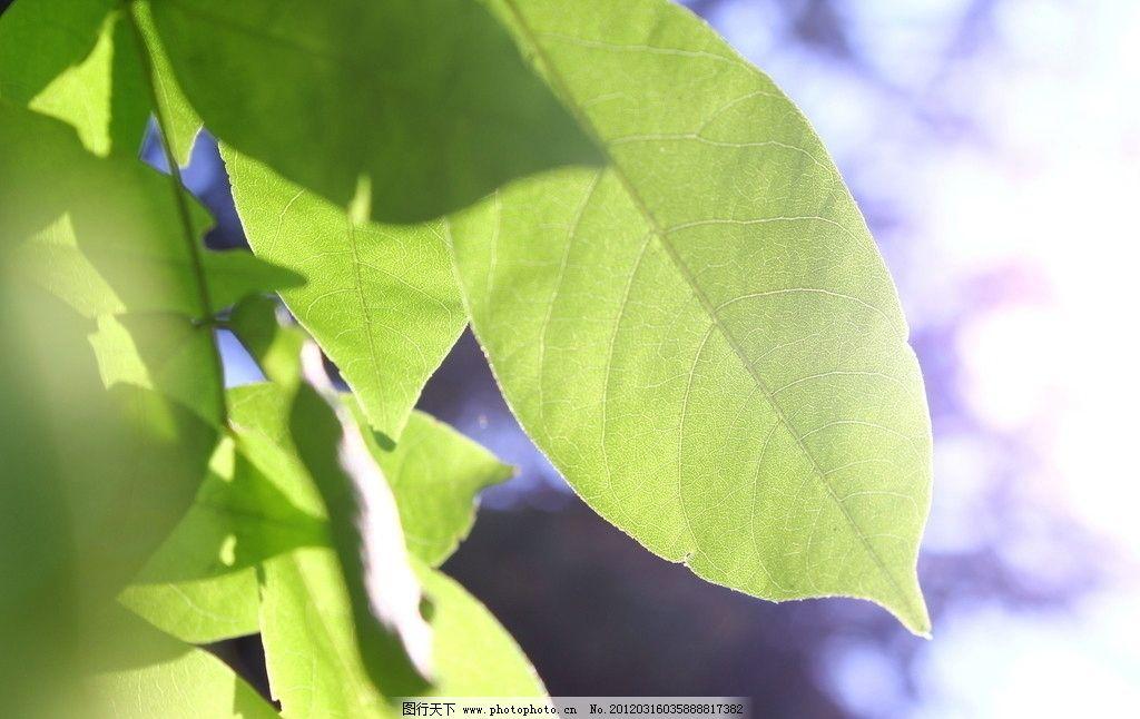 叶子 树木树叶 生物世界 摄影 72dpi jpg